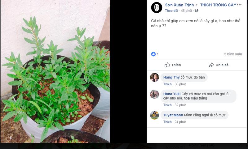 Hội Thích trồng cây: Từ thế giới ảo đến chợ 0 đồng - ảnh 3