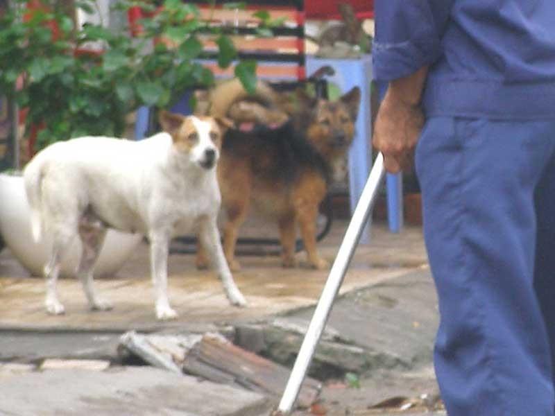 Chụp ảnh chó ị bậy làm bằng chứng xử phạt - ảnh 1