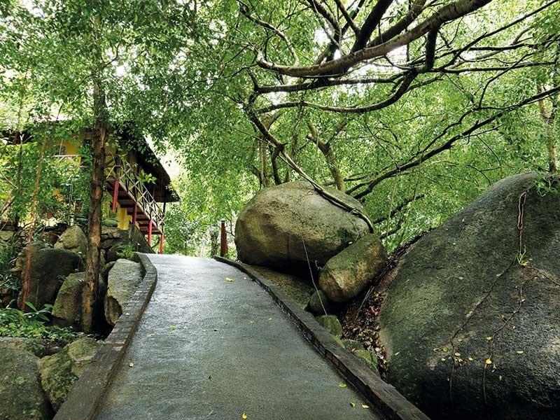 Rời Sài Gòn, về chùa trong mây núi - ảnh 2