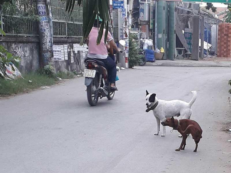 Dân đăng ký nuôi chó, phường không nhận là sai! - ảnh 1