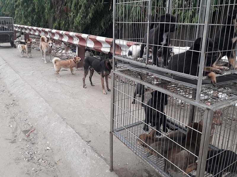 Dân đăng ký nuôi chó, phường không nhận là sai! - ảnh 2