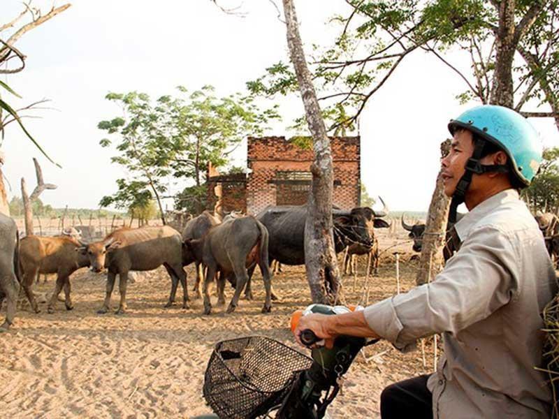 Cò đất vẫn ăn theo dù Sài Gòn Safari 'đứng hình' - ảnh 1