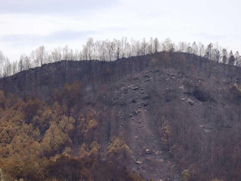 Rừng ở 5 tỉnh miền Trung bị cháy - ảnh 1