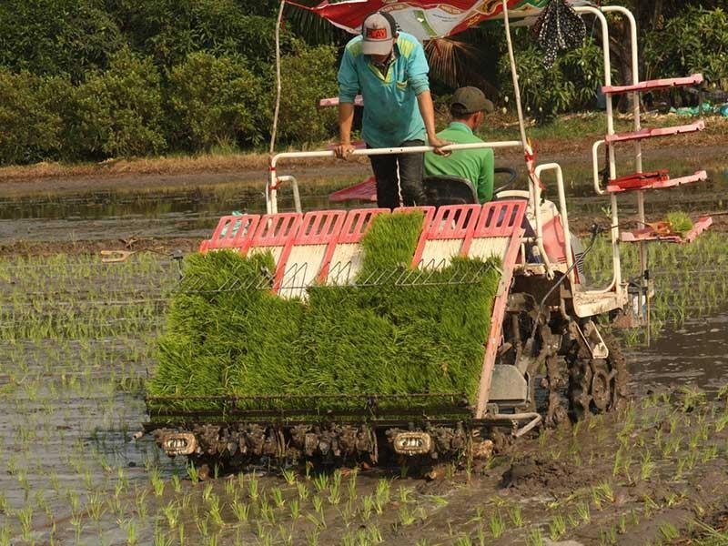 Ba vô lý về điều kiện mua đất trồng lúa - ảnh 1