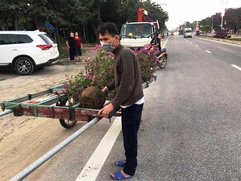 Kẻ gian nhổ trộm 1.400 cây hoa ly tết - ảnh 1
