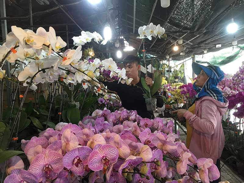 Hoa tết Việt Nam thắng đậm hoa Trung Quốc - ảnh 1