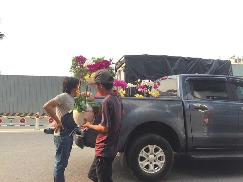 Hoa tết Việt Nam thắng đậm hoa Trung Quốc - ảnh 3