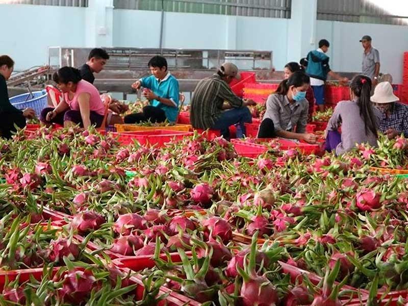 Tìm thị trường mới cho nông sản Việt - ảnh 2