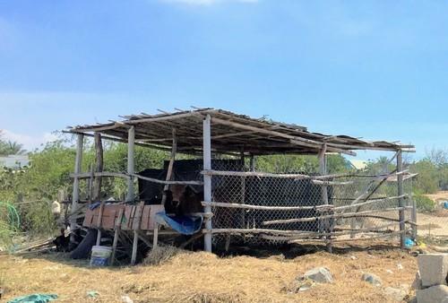 Nhịp sống ở thôn Văn Lâm 3 sau những ngày cách ly - ảnh 5