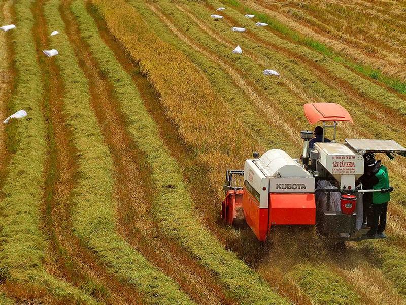 Bộ Công Thương lý giải đề xuất tạm dừng xuất khẩu gạo - ảnh 1