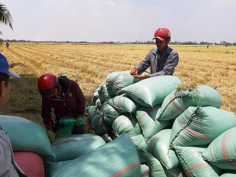 Việt Nam không thiếu gạo như nhiều người lo ngại - ảnh 1