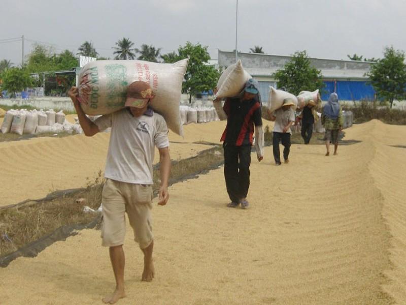 Hiến kế cứu gạo xuất khẩu chất đống tại cảng - ảnh 2