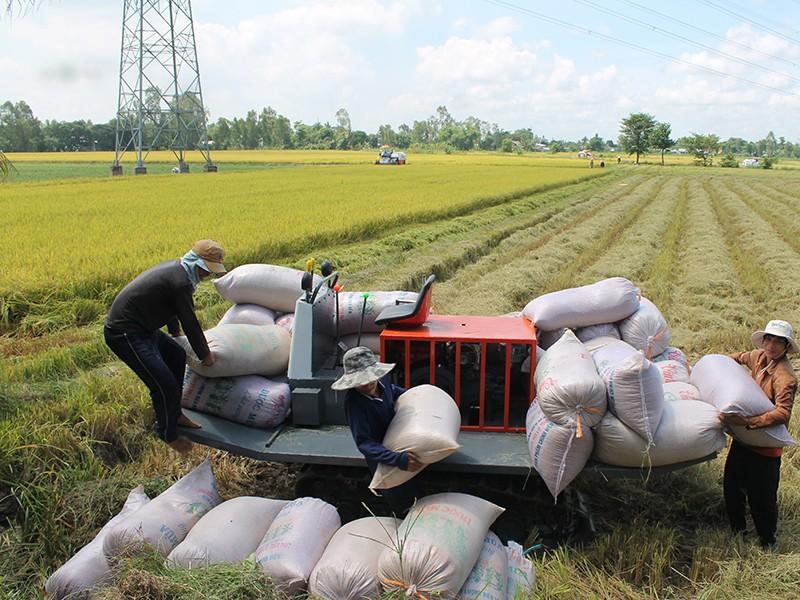 Xuất khẩu gạo rối tung vì điều hành bất nhất - ảnh 2