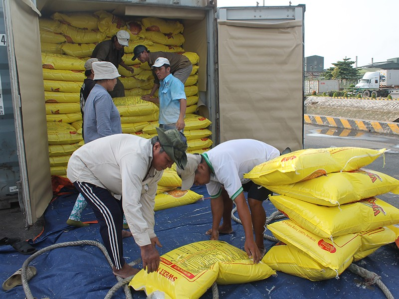 Xuất khẩu gạo rối tung vì điều hành bất nhất - ảnh 1