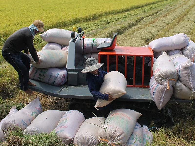 Cho xuất khẩu gạo, khẩu trang y tế bình thường - ảnh 1