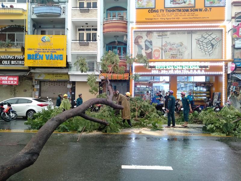 Mối nguy từ cây đổ do bật gốc trong mùa mưa - ảnh 1