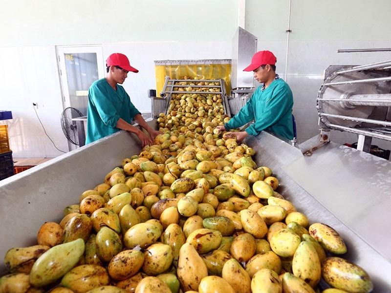 Việt Nam đặt mục tiêu vào nhóm nước nông nghiệp phát triển - ảnh 1
