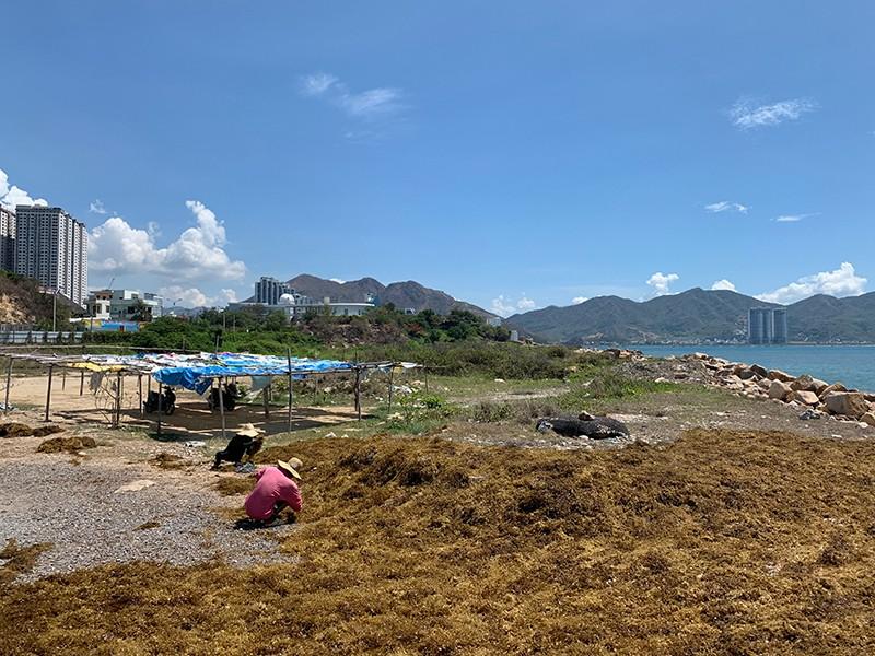 Nhùng nhằng thu hồi dự án lấn biển trái phép ở Nha Trang - ảnh 1
