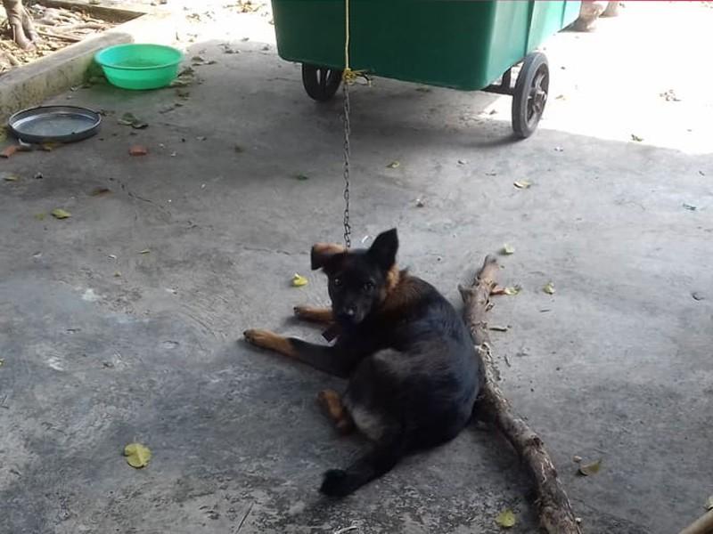 Hy hữu hàng xóm kiện nhau ra tòa giành quyền nuôi chó - ảnh 1