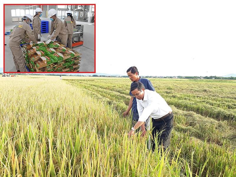Gạo Việt Nam thẳng tiến vào châu Âu - ảnh 1