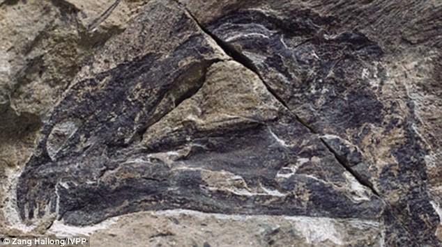 Phát hiện hóa thạch 'khủng long dơi' tại Trung Quốc - ảnh 3