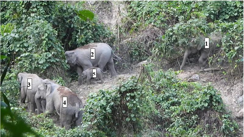 Phát hiện 1 voi con khoảng 1 tuổi - ảnh 1