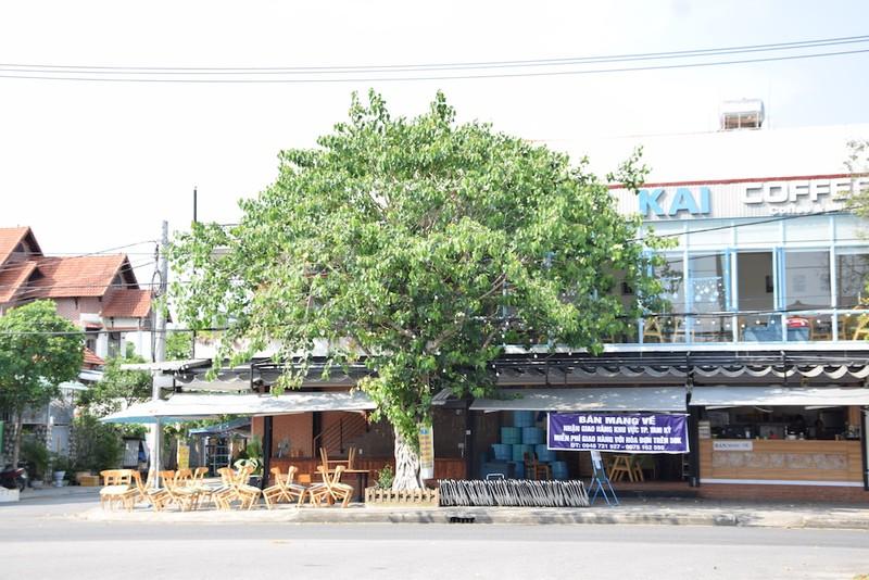 Quảng Nam mong buôn bán, hoạt động vận tải trở lại - ảnh 2