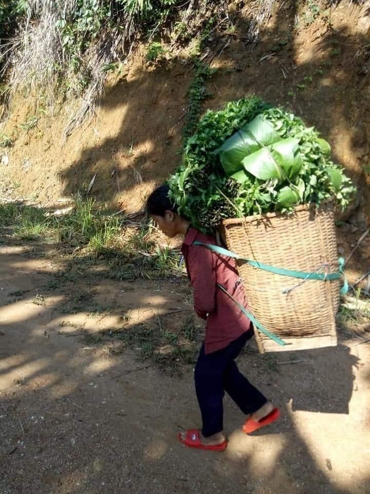 Người dân Trà My hái gần 10 tấn rau rừng gửi vùng dịch Đà Nẵng - ảnh 1