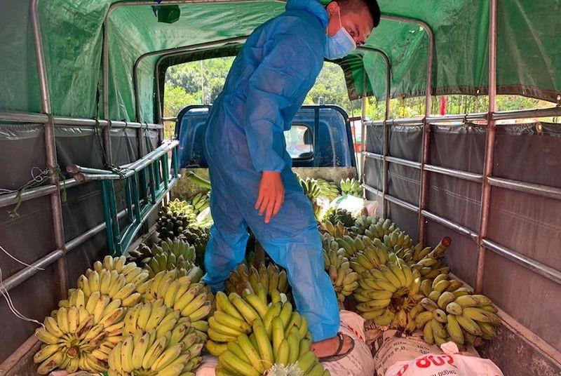 Người dân Trà My hái gần 10 tấn rau rừng gửi vùng dịch Đà Nẵng - ảnh 14