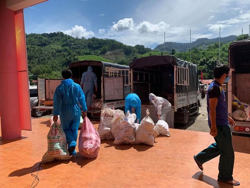 Người dân Trà My hái gần 10 tấn rau rừng gửi vùng dịch Đà Nẵng - ảnh 16