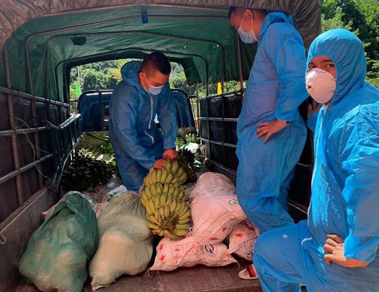Người dân Trà My hái gần 10 tấn rau rừng gửi vùng dịch Đà Nẵng - ảnh 15