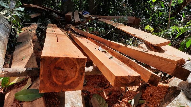 Quảng Nam yêu cầu điều tra vụ phá rừng phòng hộ tại huyện Bắc Trà My - ảnh 2