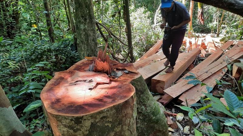 Quảng Nam yêu cầu điều tra vụ phá rừng phòng hộ tại huyện Bắc Trà My - ảnh 4