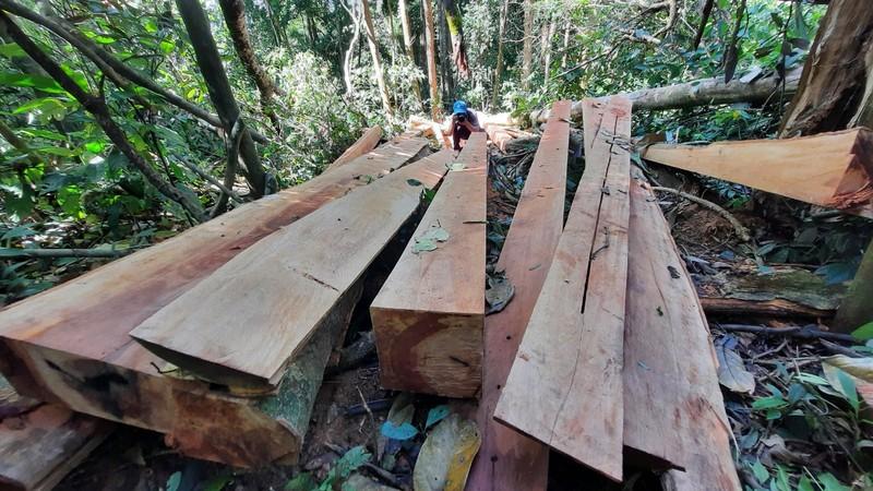 Quảng Nam yêu cầu điều tra vụ phá rừng phòng hộ tại huyện Bắc Trà My - ảnh 5