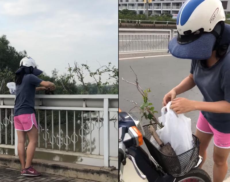 Camera ghi cảnh một phụ nữ trộm cây nơi công cộng - ảnh 1