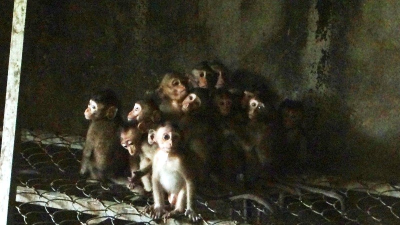 Trắng đêm giải cứu thú rừng quý hiếm ở Bình Phước - ảnh 5