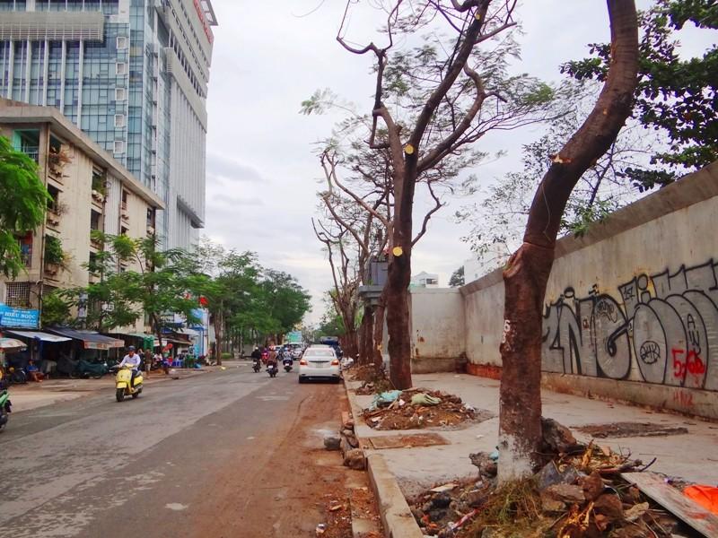 Cảnh cây xanh tan tành vì công trình chạy… Tết - ảnh 1