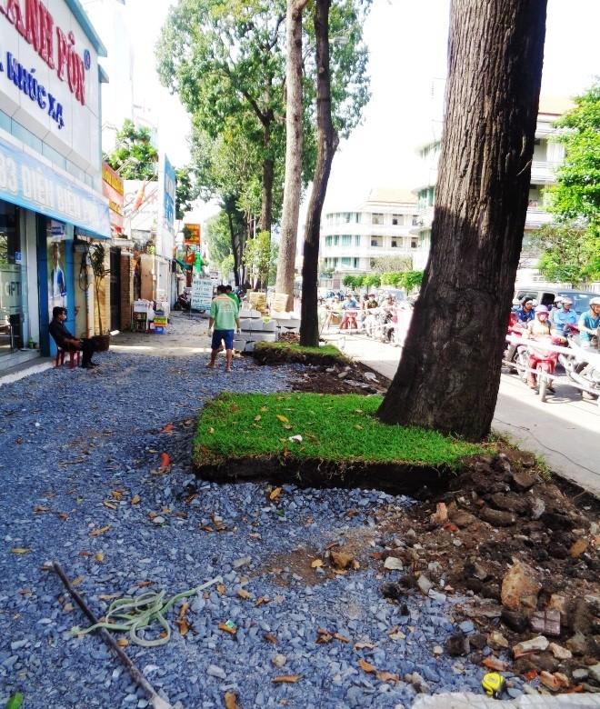 Cảnh cây xanh tan tành vì công trình chạy… Tết - ảnh 2