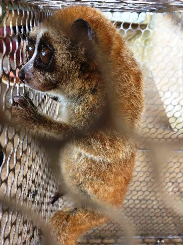 Dùng Facebook rao bán thú rừng quý hiếm - ảnh 2