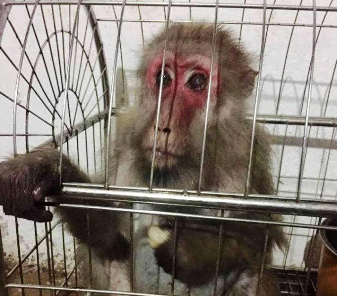 Dùng Facebook rao bán thú rừng quý hiếm - ảnh 1