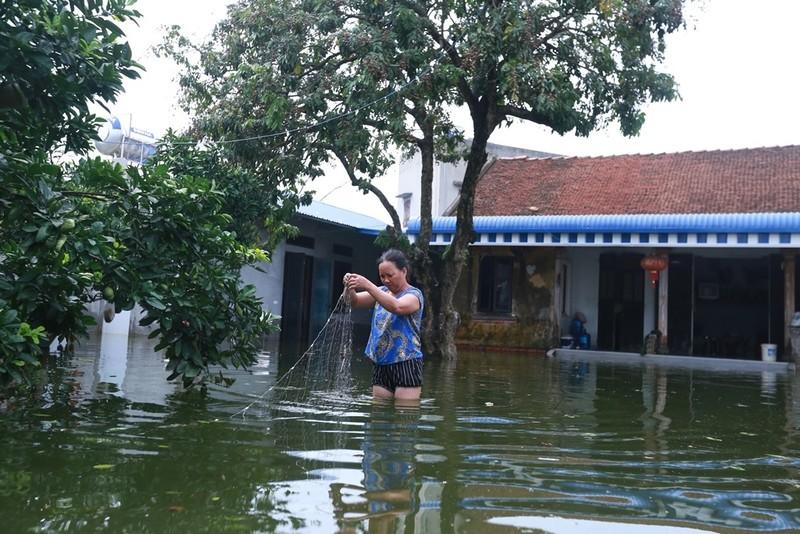 Thủ đô thành sông: Dân thả lưới sân nhà bắt cá - ảnh 2