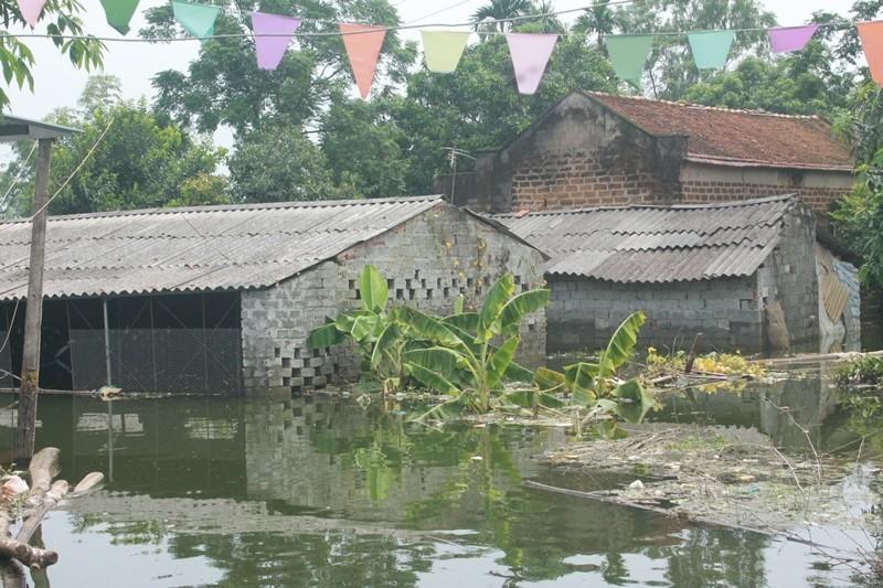 Thủ đô thành sông: Dân thả lưới sân nhà bắt cá - ảnh 6