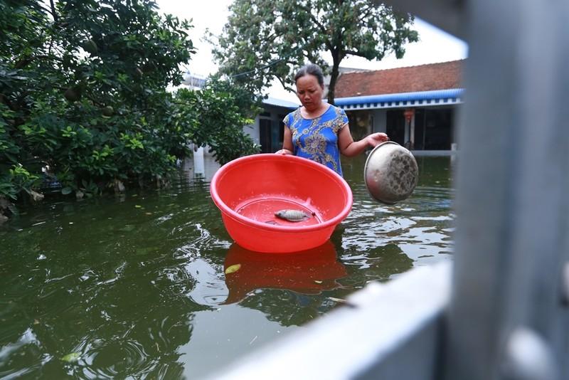 Thủ đô thành sông: Dân thả lưới sân nhà bắt cá - ảnh 8