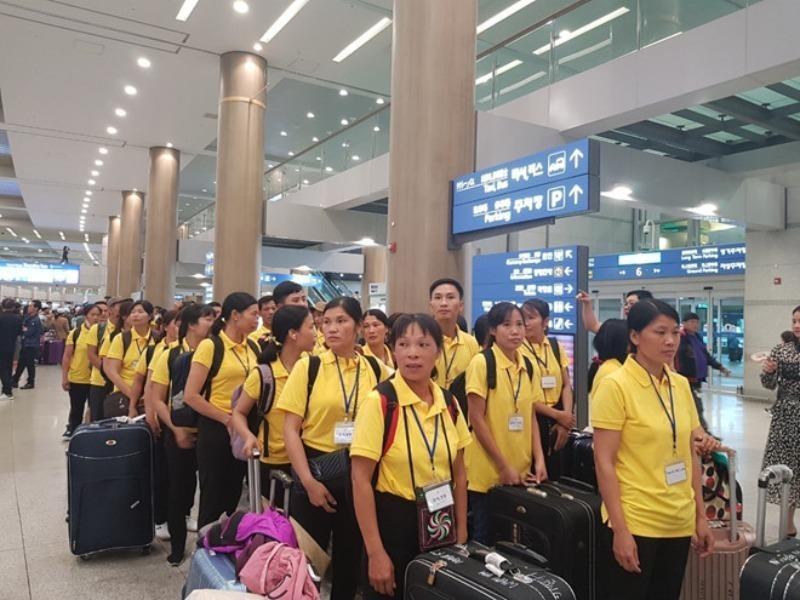 Nhiều lao động Việt sang Hàn không biết làm nghề - ảnh 1
