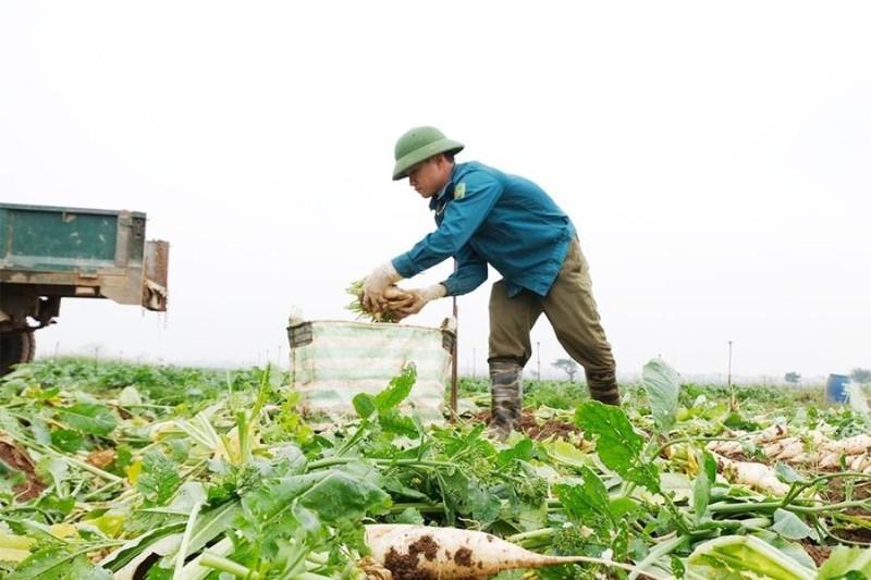 Ngành đường sắt hỗ trợ nông dân vận chuyển nông sản - ảnh 1