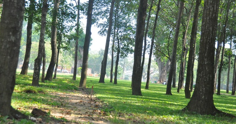 Cận cảnh cây xanh ở công viên Gia Định sắp bị đốn hạ - ảnh 11