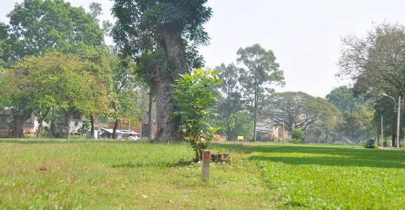 Cận cảnh cây xanh ở công viên Gia Định sắp bị đốn hạ - ảnh 12