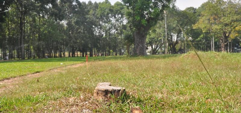 Cận cảnh cây xanh ở công viên Gia Định sắp bị đốn hạ - ảnh 13