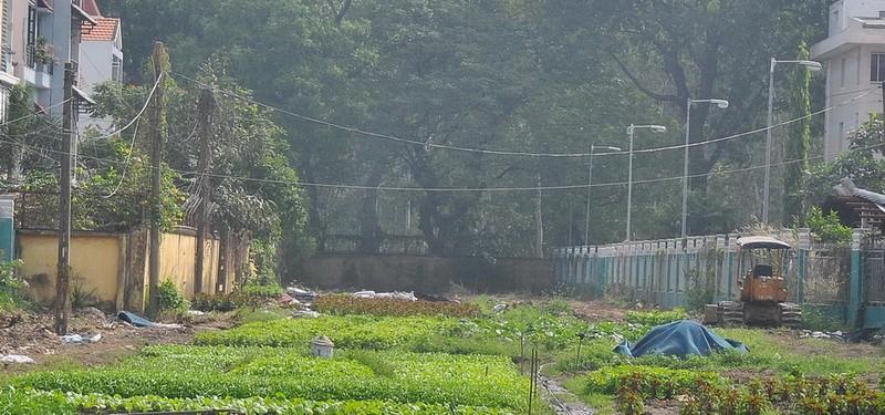 Cận cảnh cây xanh ở công viên Gia Định sắp bị đốn hạ - ảnh 3