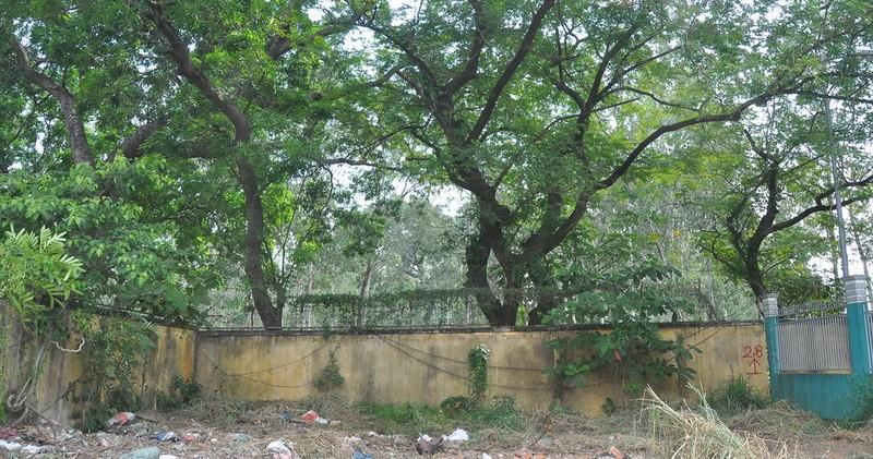 Cận cảnh cây xanh ở công viên Gia Định sắp bị đốn hạ - ảnh 7